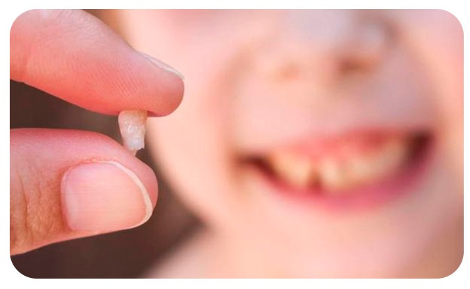 Células madre en los diente de leche